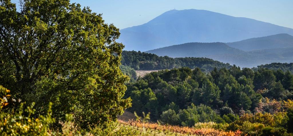 Terre de Vaucluse 2015 - Samedi 014.jpg